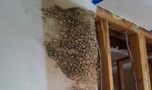 Mold Infestation Found In Wall After A Ceiling Leak