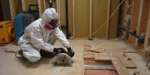 Mold removal Lowell expert removing Mold Removal